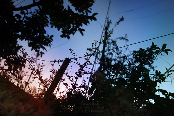 20140828_IMG_7792_sky.jpg