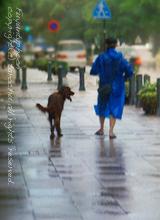 bluedog_160220.jpg